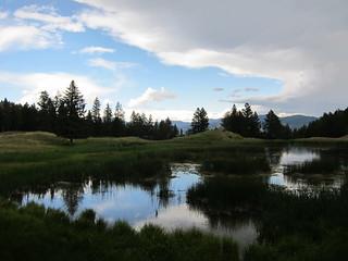 Rain in an alpine meadow
