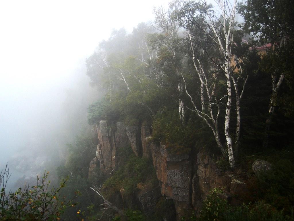 Fog on the Bluffs