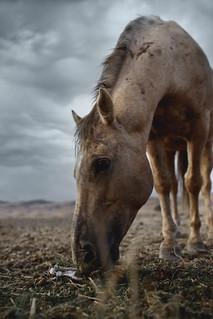 Horse #9119 | by mark sebastian