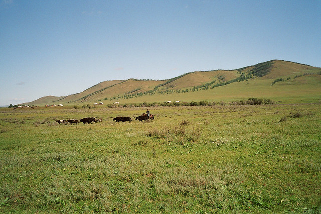Mongolia, herd - Mongolie, troupeau