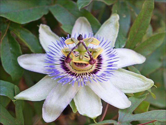 L'esprit de la fleur