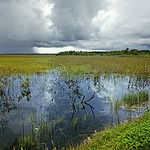 Swamp_and_Approaching_Storm