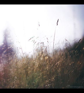 Meadow - 5064 | by motion-images