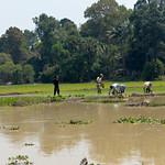 11 Siem Reap en bici 31
