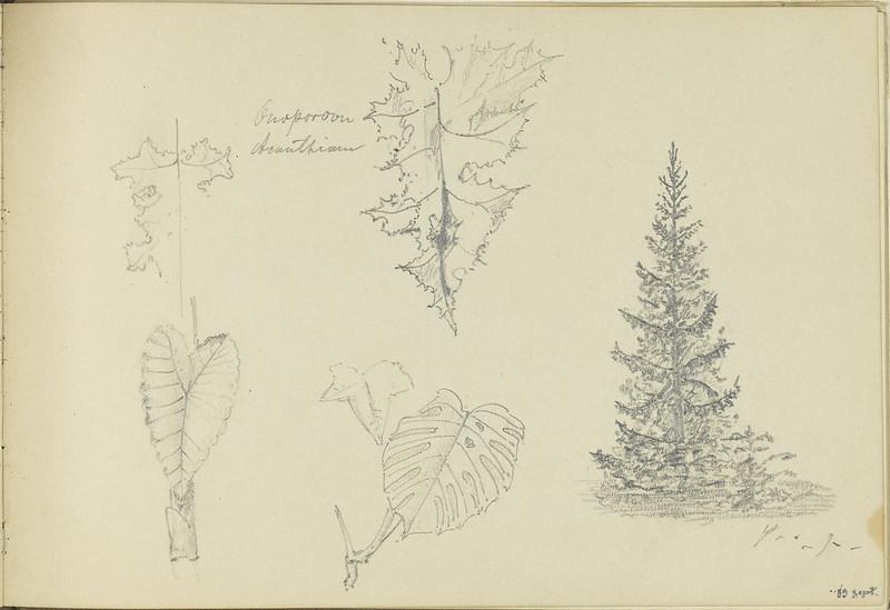 Gustav Nyström: Sketch book