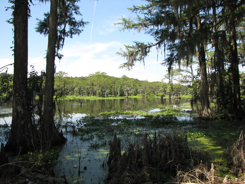 lakeview southcarolina dilloncounty smalltown pagesmillpond pond lake cypress swamp trees gerrydincher