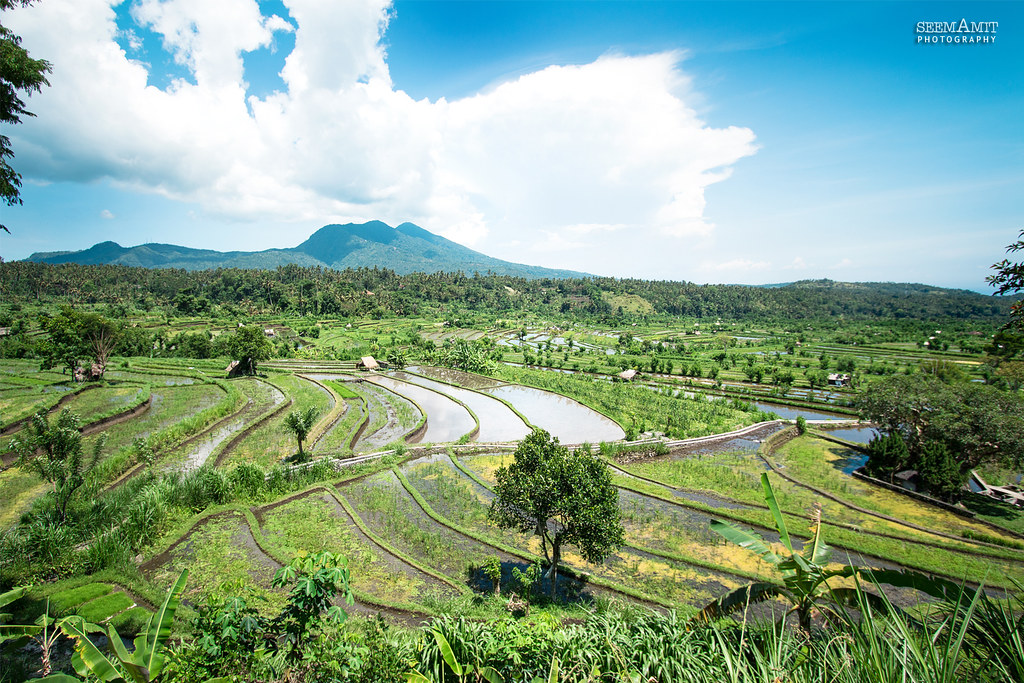 Bali Landscape Rice Is Considered To Be The Most Important Flickr