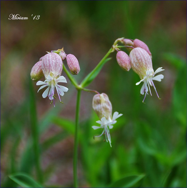 ✿ wild flower 04