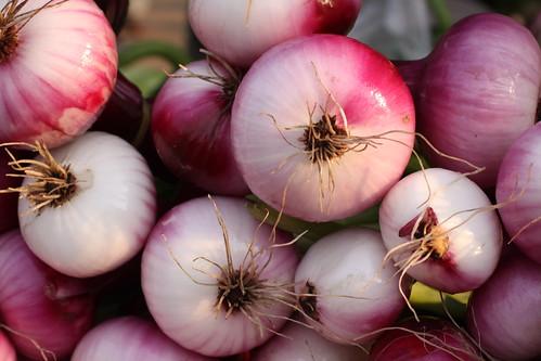Onions, unedited | by Kenneth Ristau