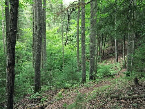 michigan upperpeninsula deltacounty hiawathanationalforest canong1x haymeadowcreektrail