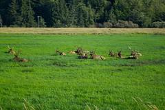 North American Wildlife 72