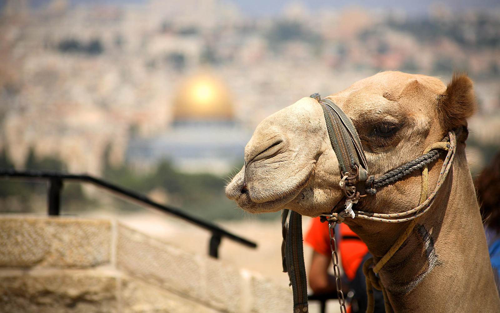 Jerusalem_Panorama _4_Noam Chen_IMOT
