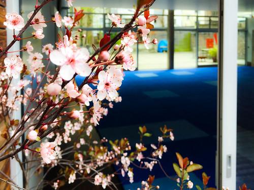 IMG_6177 | by aikido forum kishintai