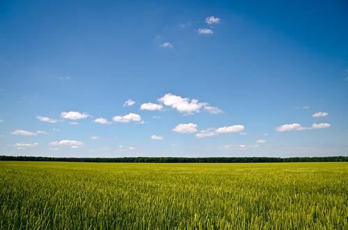 blue sky green field clouds landscape open wheat wide