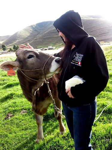 Student pets a cow