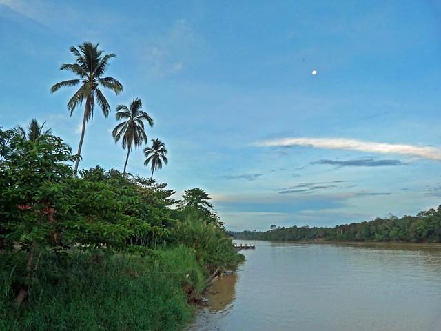 Río Kinabatangan. ¿El Amazonas de Borneo?