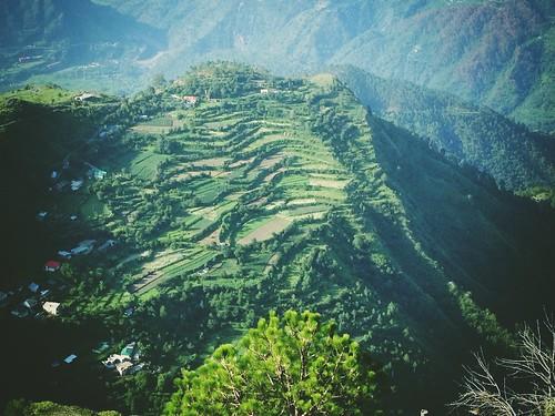 india green beautiful landscape photography farm hills himachalpradesh chail iphonephotography kalimatatemplechail ricktoor