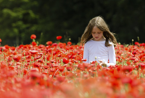 girl in the poppies | by Jon Bunting