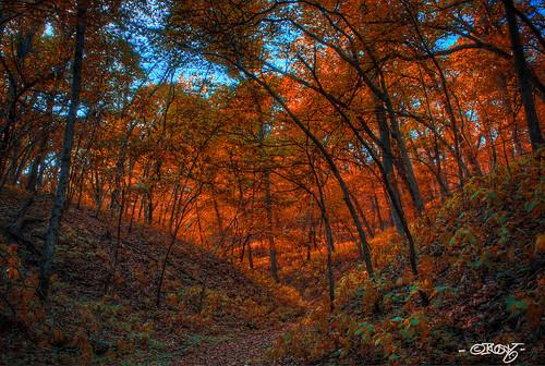 nebraska unitedstates omaha hollow nealewoods
