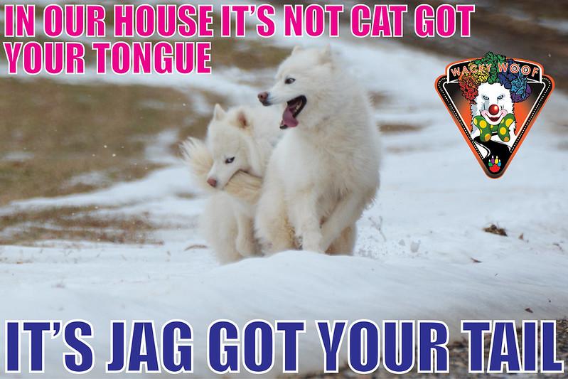 Cat Got Your Tongue...