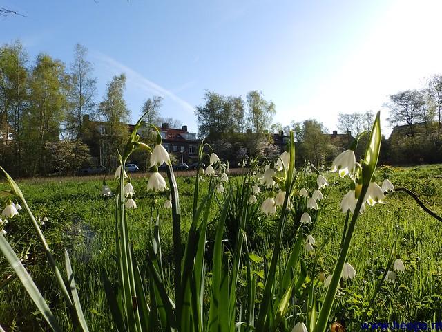 04-05-2013 A.W.V. Aalsmeer (25)