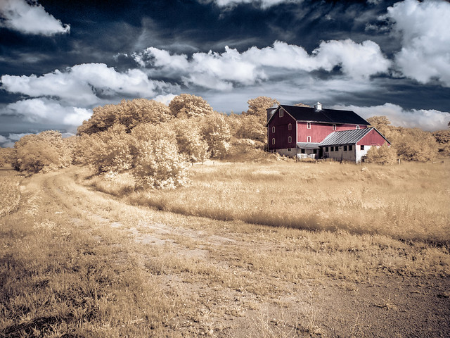 The Red Barn - Infrared Gold