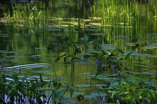 green water 1 pond pentax connecticut newengland ct ripples waterscape k3 2014 southfordfallsstatepark vbd smcpentaxda55300mmf458ed pentaxk3 summer2014