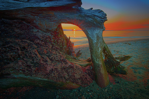 ocean sunset beach scenery driftwood edmondswa nikond4 nikkor142428 rrsbh40 gitzoseries1traveler