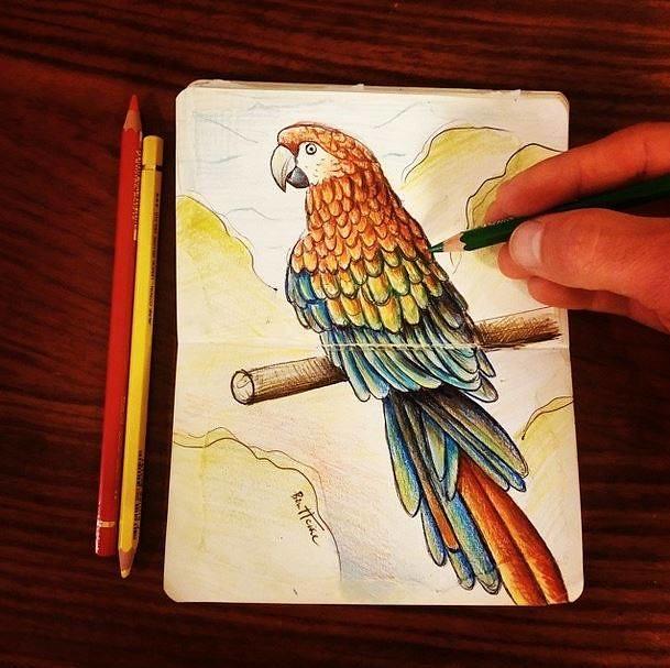 Parrot Sketch Onthedraw Project Prints Fb Soundclou Flickr