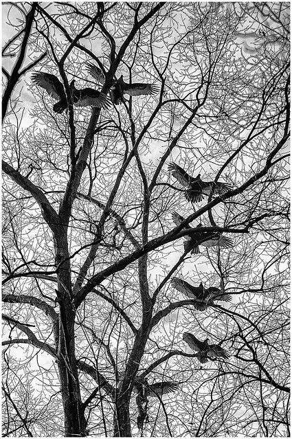 7-birds-