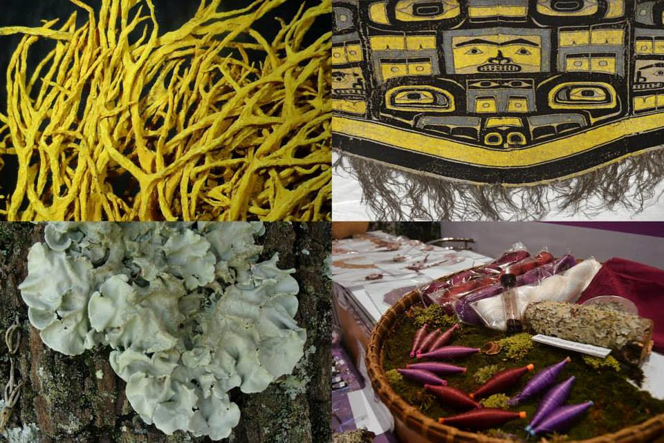 Lichen dyes | This week we will dive into the world of liche