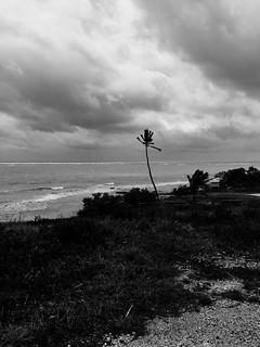 lone palm @ Bahia Honda