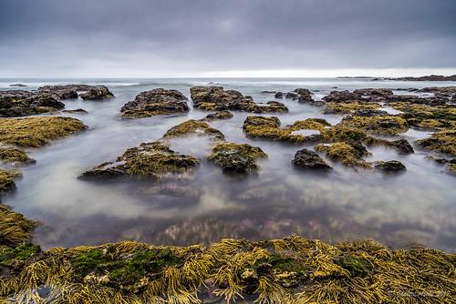 2016 australia diggerscamp nsw newsouthwales yuraygirnationalpark beach cloudy coastal longexposure rocks sea seaweed sonya7r