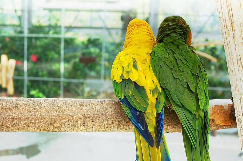 2014-07-27 Kakegawa花鳥園
