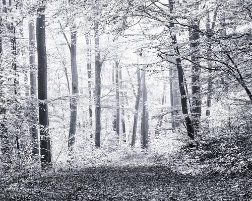 anlässe bäume em5 licht mzuiko6028 nebel omd pflanzen schwäbischealb wald wanderung wege bw monochrome sw sanktjohann badenwürttemberg deutschland de