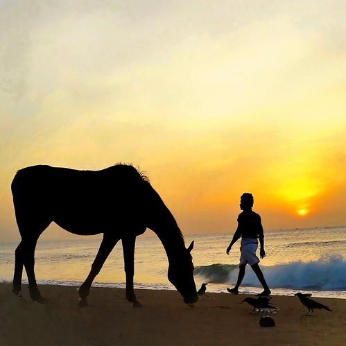 sunrise madras southindia horse man walking scavenging silhouette