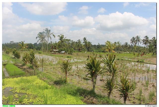 Indonesie - Bali - Ubud
