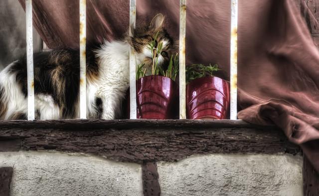 Bretagne 09: un chat breton ...