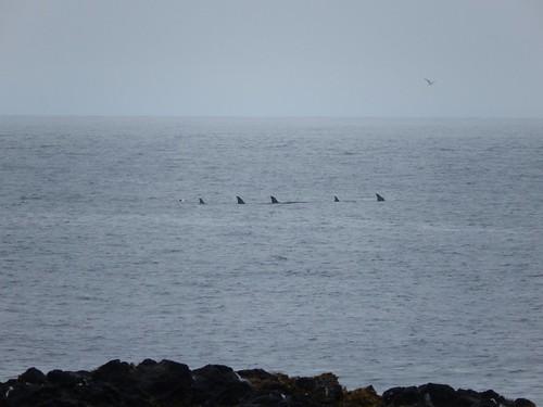 IJsland - Snaefellsnes - Ondverdarnes - orkas - 2