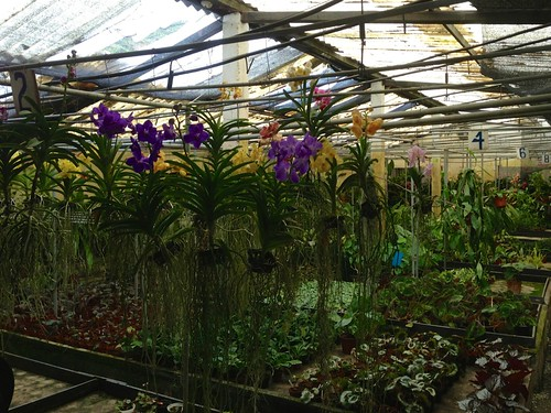 orchid orchidfarm