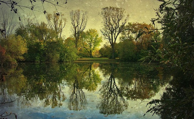 Reflectionof of old trees in the lake , 75085/3777