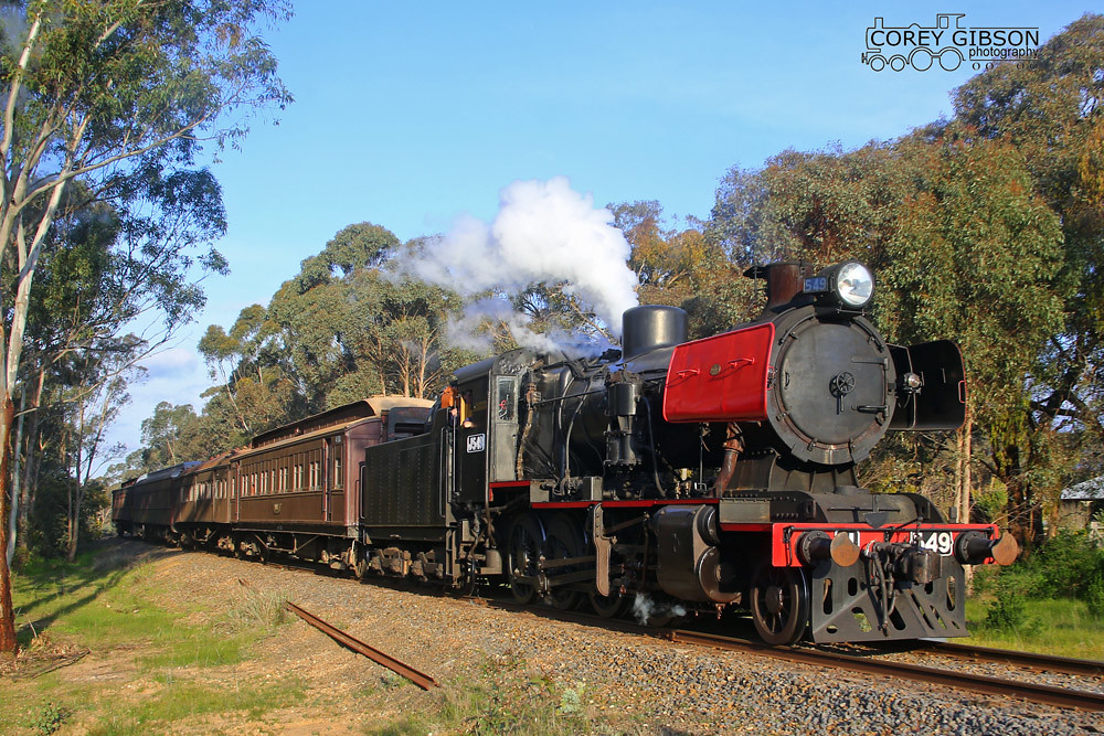 J549 emerges from the Maldon scrub by Corey Gibson