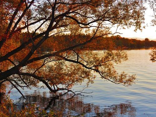sunset fall autumn fallcolours seasons lakewilcoxpark lakewilcox oakridgesmoraine richmondhill ontario canada niceasitgetslevel1