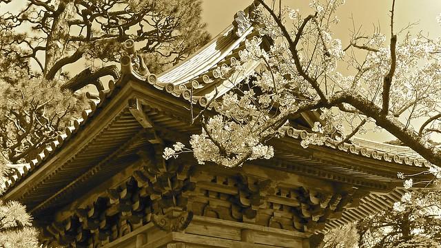 Japanese Tea Garden - (Explored)