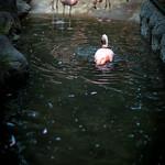2014-9-19 Flamingo Nogeyama Zoo Yokohama