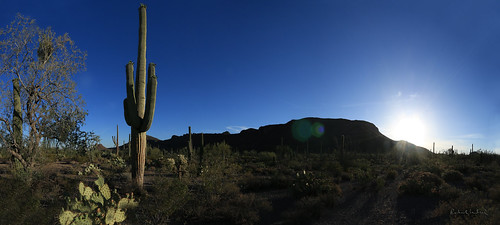 morning arizona panorama landscape dawn tucson wideangle panoramic trail np saguaro 1022mm saguaronationalpark sonorandesert sunflare canoneos70d pantherpeakwash