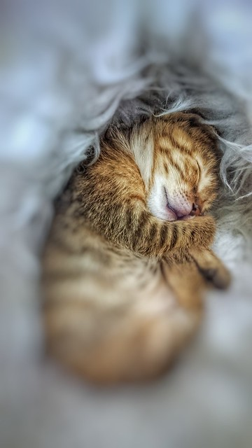 My little cat is sleeping time