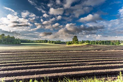 blue sky cloud green norway pattern fields cloudporn tønsberg vestfold husvik snippen narverød normannphotography