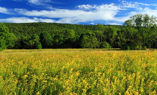 flowers trees summer sky field grass clouds landscape pennsylvania meadow goldenrod creativecommons vegetation wildflowers bluemountain appalachianmountains monroecounty kittatinnymountain sgl168 stategameland168 stategamelands168 aquashicolacreekvalley