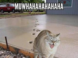 Muwhahahahahahahahaha!!!!